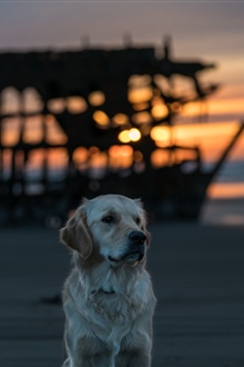 Dog, beach, sea, sunset iPhone Wallpaper Preview