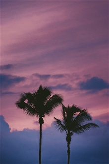 Palm trees, night, sky iPhone Wallpaper Preview