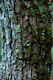 Tree trunk, moss iPhone Wallpaper Preview
