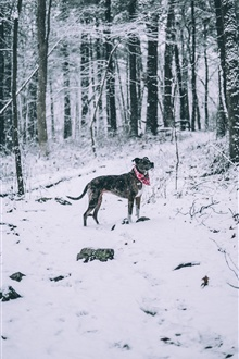 Dog in winter, scarf, snow, trees iPhone Wallpaper Preview