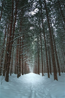 Trees, snow, path, winter iPhone Wallpaper Preview