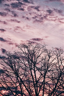 Trees, twigs, sky, sunset iPhone Wallpaper Preview