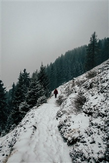 Winter, snow, slope, trees, person iPhone Wallpaper Preview