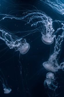 Beautiful jellyfish, underwater iPhone Wallpaper Preview