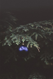 Fir twigs, blue Christmas ball iPhone Wallpaper Preview