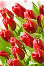 A bouquet of red tulips iPhone wallpaper