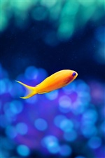 A yellow fish, blue water iPhone wallpaper
