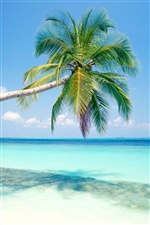 Blue beach a coconut tree iPhone wallpaper