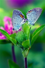 Butterfly, green leaves, blurred background iPhone wallpaper