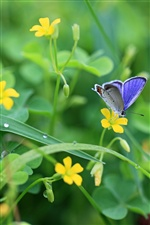 Butterfly with yellow flowers, green leaves iPhone wallpaper