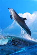 Dolphin jumping iPhone Wallpaper