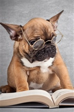 Funny picture, dog reading a book iPhone wallpaper
