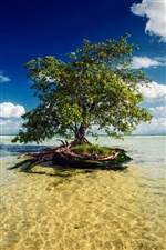 Mayan Riviera, lonly tree iPhone wallpaper
