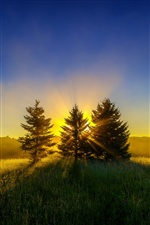 Morning sunrise, trees, rays iPhone wallpaper