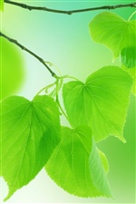 Nature green leaves iPhone wallpaper