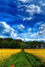 Beautiful fields scenery, rape flowers, trees, blue sky iPhone wallpaper