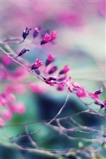 Beautiful garden, hazy purple flowers iPhone Wallpaper