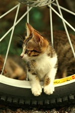 Cat and bicycle wheel iPhone wallpaper