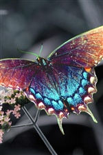 Colorful butterfly iPhone wallpaper