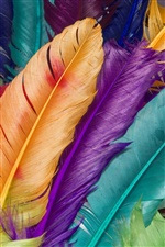 Colorful feathers iPhone wallpaper