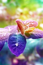Colorful leaves, water drops iPhone wallpaper