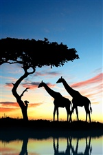 Creative images, giraffes, prairie, silhouettes iPhone wallpaper