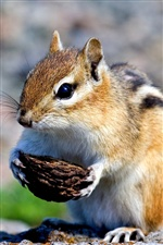 Cute chipmunk iPhone Wallpaper