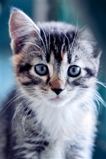 Cute kitten close-up iPhone wallpaper