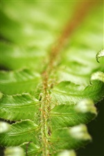 Fern leaves macro iPhone wallpaper