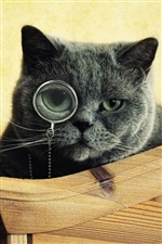 Funny animals, black cat wear glasses iPhone wallpaper