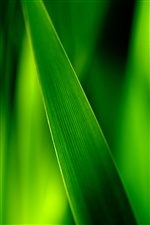 Green leaf macro iPhone wallpaper