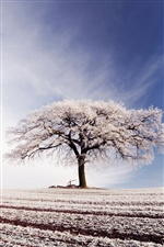 Lonely tree, winter, frost iPhone wallpaper