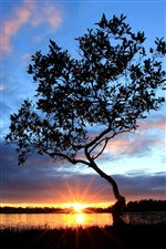 River side evening, tree, sunset iPhone wallpaper
