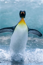 Antarctic penguin iPhone wallpaper