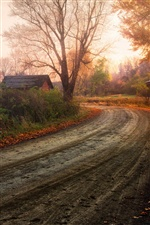 Autumn countryside, trees, red leaves, road iPhone wallpaper