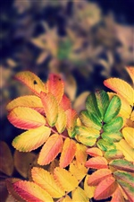 Autumn yellow leaves iPhone wallpaper
