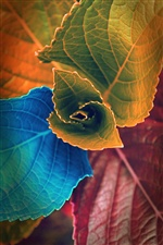 Colorful leaves iPhone wallpaper