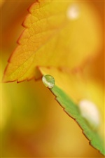 Dew on autumn orange leaves iPhone wallpaper