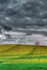 England scenery, fields, tree, cloudy sky iPhone wallpaper