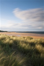 England sea coast scenery, grass iPhone wallpaper