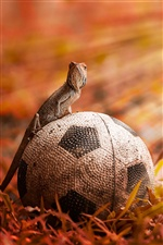 Football with lizard iPhone wallpaper