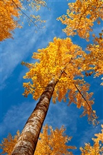 Forest autumn trees, blue sky iPhone wallpaper