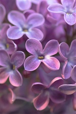 Four petals purple flowers iPhone Wallpaper