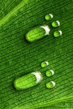 Green leaves, water drops footprints iPhone wallpaper