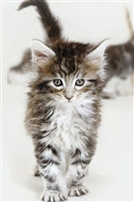 Kitten walking iPhone wallpaper