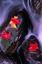 Red maple leaves, water streams iPhone wallpaper