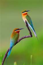 Two kingfisher iPhone wallpaper