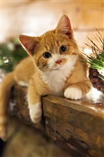 Cute kitten at home holidays iPhone wallpaper