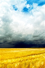 Golden wheat fields, cloudy sky iPhone wallpaper
