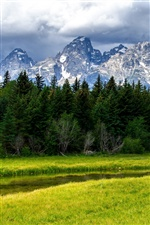 Grand Teton National Park, mountains, trees, grass iPhone wallpaper